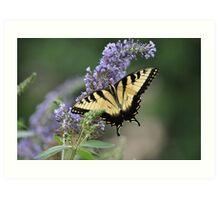 The Monarch on Butterfly Bush Art Print