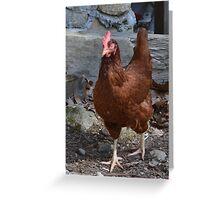 Rhode Island Red Chicken Greeting Card