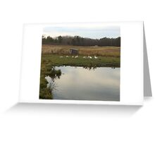 Duck pond Greeting Card