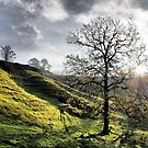 Ribblehead Lone Tree - As Seen On T.V.!! by Sandra Cockayne