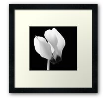 Cyclamen Flower Framed Print