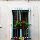 Window Plants by Rae Tucker