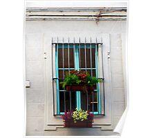 Window Plants Poster