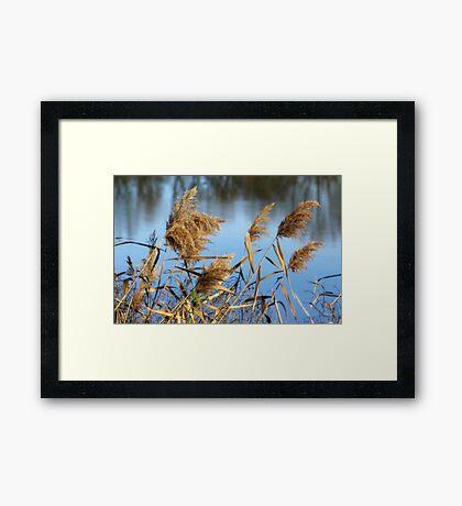 Water Brush Framed Print