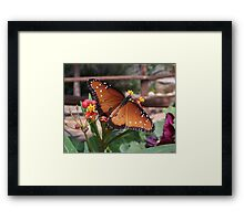 The Queen Framed Print