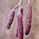 Textured Alder Catkins by Astrid Ewing Photography