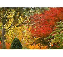 Autumn in Edegem Photographic Print