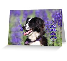 dog in a field of Blue lupin (Lupinus pilosus) flowers  Greeting Card