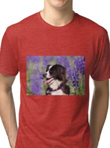 dog in a field of Blue lupin (Lupinus pilosus) flowers  Tri-blend T-Shirt