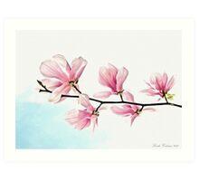 Saucer Magnolia  Art Print