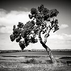 Coastal Tree by Christine  Wilson Photography
