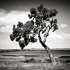 Coastal Tree by Christine  Wilson Photography
