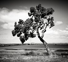 Coastal Tree by Christine Wilson