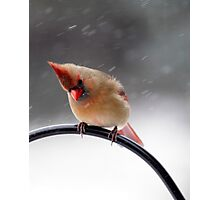 Baby It's Cold Outside~ Photographic Print