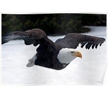 Free as an Eagle Poster