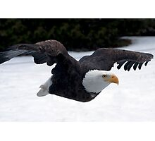Free as an Eagle Photographic Print