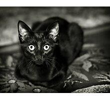 ''Black Beauty'' Photographic Print