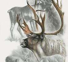 Caribou by BarbBarcikKeith