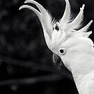 Cockatoo Visitor II by Josie Eldred