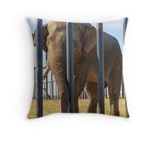 big boy elephant in full Throw Pillow