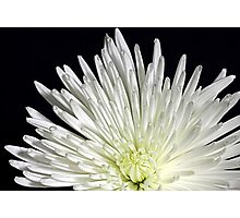 White Flower in close up Photographic Print