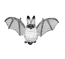 Fluffy Bat Photographic Print