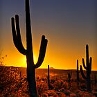 A Saguaro Sunrise by Saija  Lehtonen