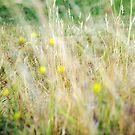Textured field Grass by Becca7