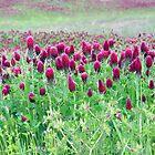 Ode To Spring by Carolyn  Fletcher