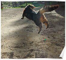 flying cat Poster