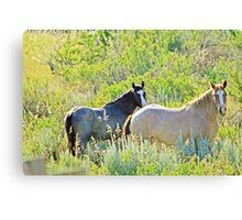 Wild Horses, Wild West Canvas Print