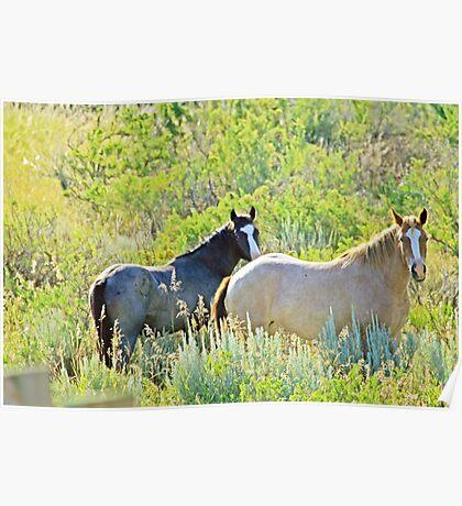 Wild Horses, Wild West Poster