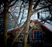 Flicker Napping Near the Window  by Jack McCabe