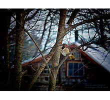 Flicker Napping Near the Window  Photographic Print