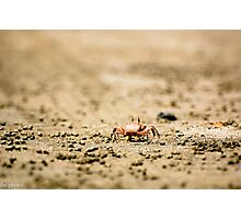 Costa Rican Crab Photographic Print