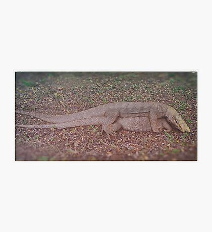 Mating. Photographic Print