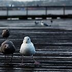 Seagulls by Zachary Kinion