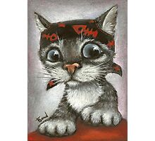 Pirate kitten Photographic Print