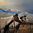 Challis Horses in  Idaho by Despot