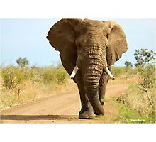 I'M RIGHT BEHIND YOU! - THE AFRICAN ELEPHANT – Loxodonta Africana Photographic Print