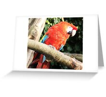 Who's a pretty boy then?  Greeting Card