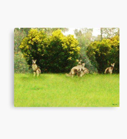 Kangaroos in the green Canvas Print