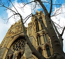 Truro cathedral  by aaronnaps
