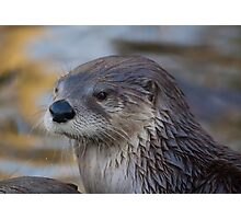 A Lonely Otter Photographic Print