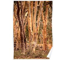 Gum Trees Poster