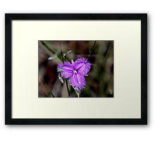Bushwalk - Purple Fringe Framed Print