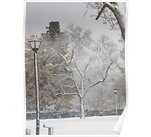 (distant) Tree With Lamp Posts Poster