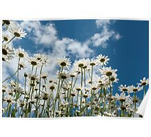 Field of Summer Daisies Poster