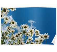 Summer Daisies Poster