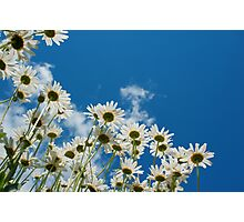 Summer Daisies Photographic Print